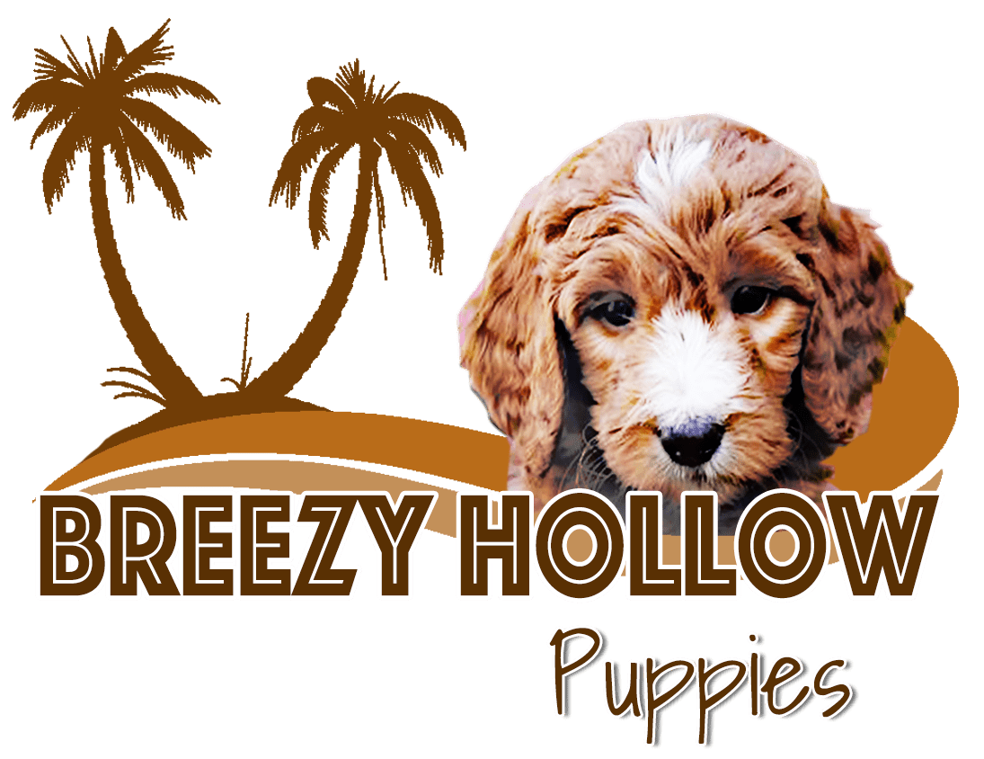 Breezy Hollow Puppies