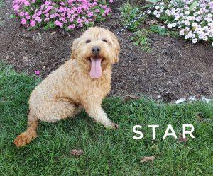 breezy hollow puppies star